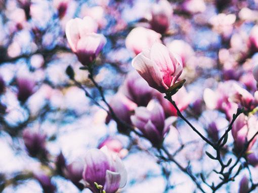 Uma flor na árvore