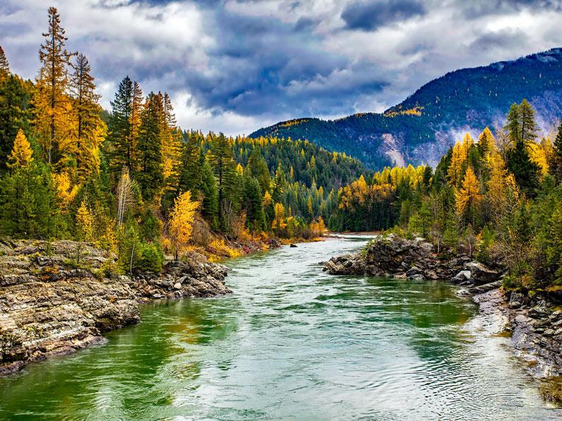 O rio passando pela floresta