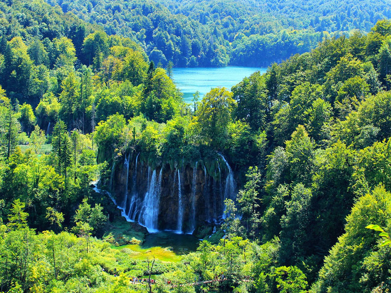 A big waterfall surrounded by green forest