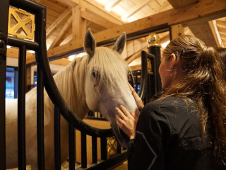 Lipizzaner stallion in a stable