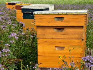 Yellow beehives in the field