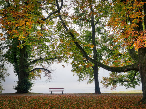 A bench in the park in autumn