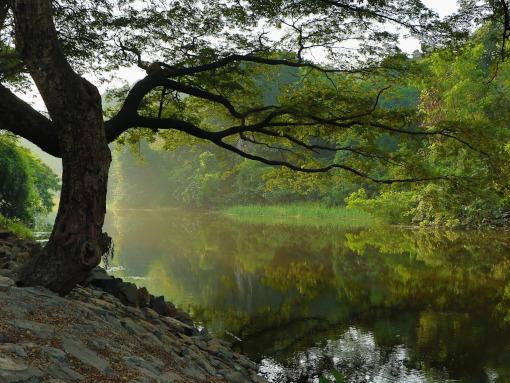 Um lago cercado pela floresta