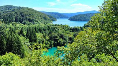 Un lago rodeado por el bosque verde