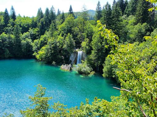 Un lago encantador rodeado por el bosque.