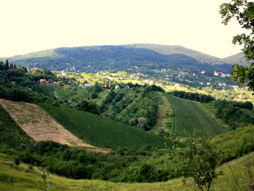 Green hills of Croatian region Hrvatsko zagorje