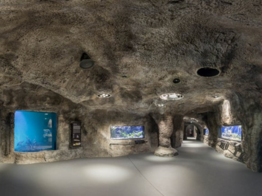 A cave-like space with built-in aquariums full of fish