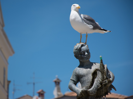Seagull standing on a sculpture